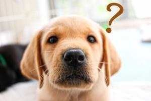 安心できるペット葬儀社とは、どんな条件を満たせばよいのだろうか?