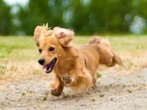 決して他人事ではなく、あなたにも起こりうる「ペットロス症候群」。ペットを飼っている飼い主なら必ず理解することが大切です。