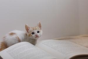 ペットを飼う前に今一度立ち止まり、きちんと考えたい。大切な要点をまとめたペットを飼う前に読みたい教科書