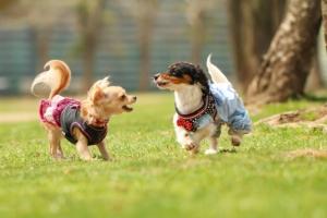 死亡届には愛犬の生年月日やその他詳細情報が必要です。事前に確認しておきましょう。