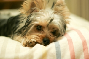 ペットの「死後硬直」の対処方法を説明しています。焦らず優しく対処してあげることが大切です。