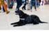 CIAの爆発物探知部隊をクビになった犬