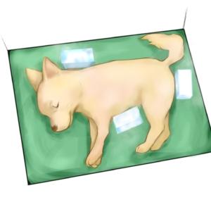 ペット冷却処置時の保冷剤の当てる位置をイラストで示しています。図のように保冷剤を当ててください。