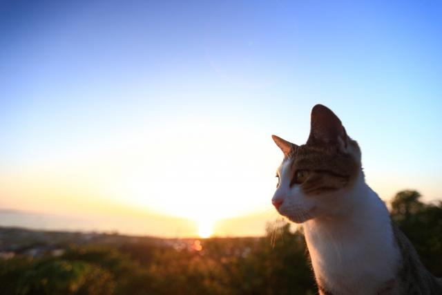 もしもあなたの周辺で野良猫が亡くなっていたらどうすれば良いのでしょうか?