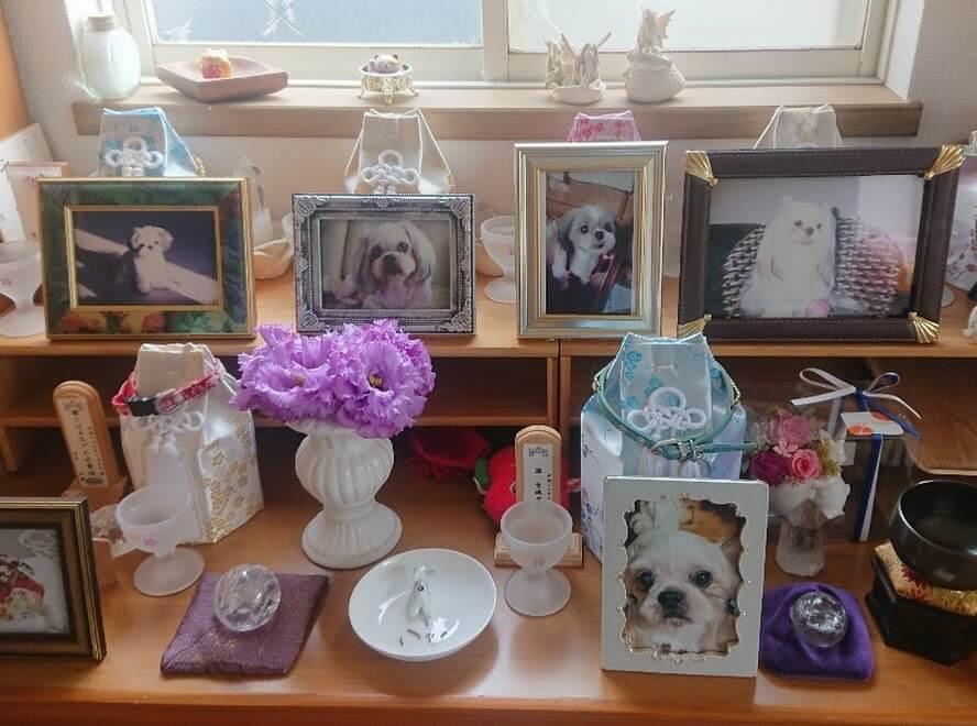 ペット葬儀 ペットセレモニーウェイビー川崎支店
